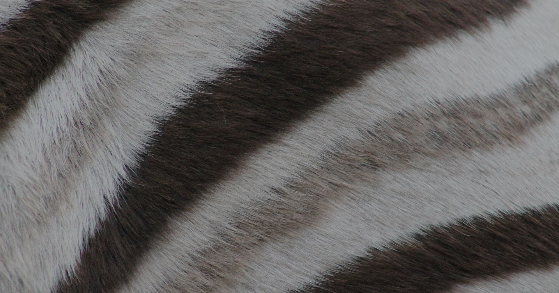 Zebra stripe detail - Ghost Mountain Inn