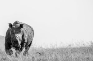 World Rhino Day 2018